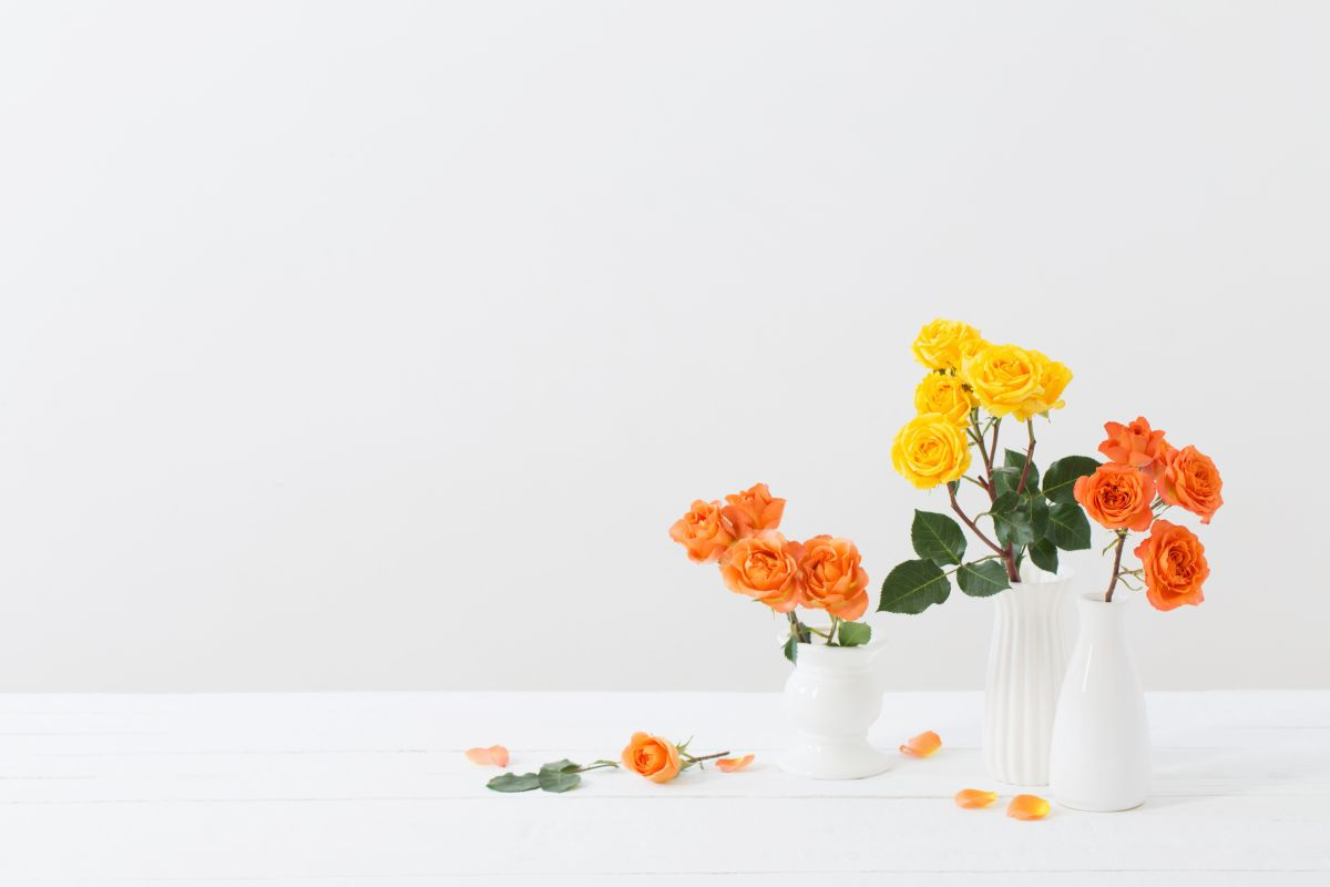 Roses,In,White,Vase,On,White,Background