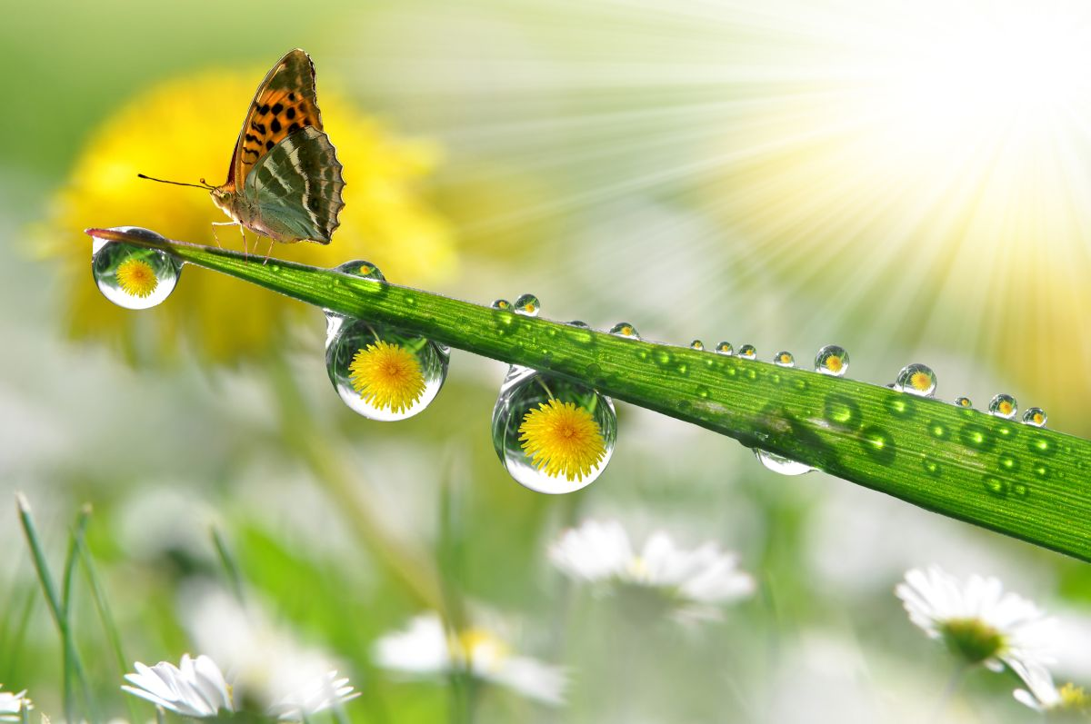Fresh,Morning,Dew,And,Butterfly