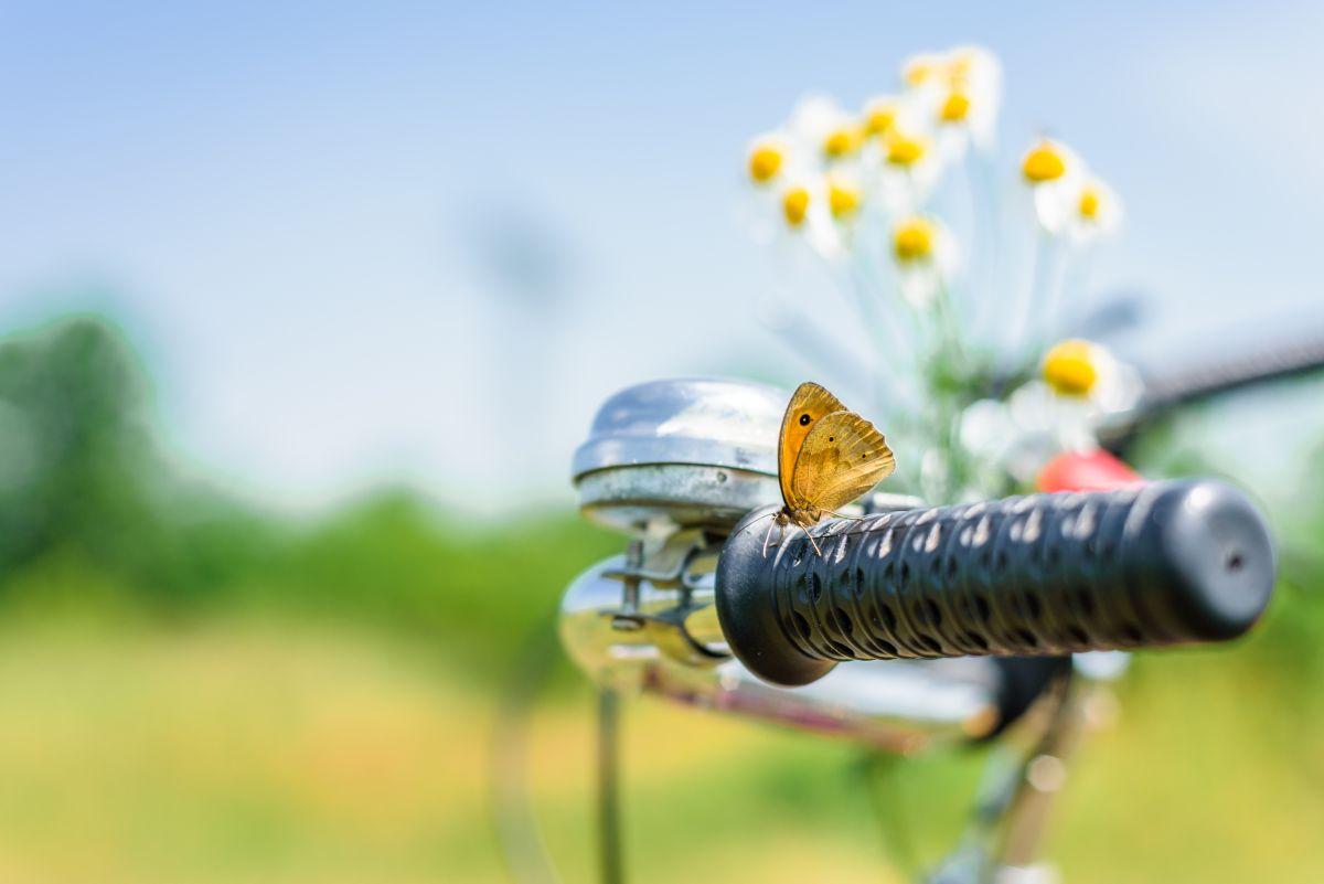 Enjoy,A,Warm,Sunny,Spring,Day,With,A,Bike,Tour