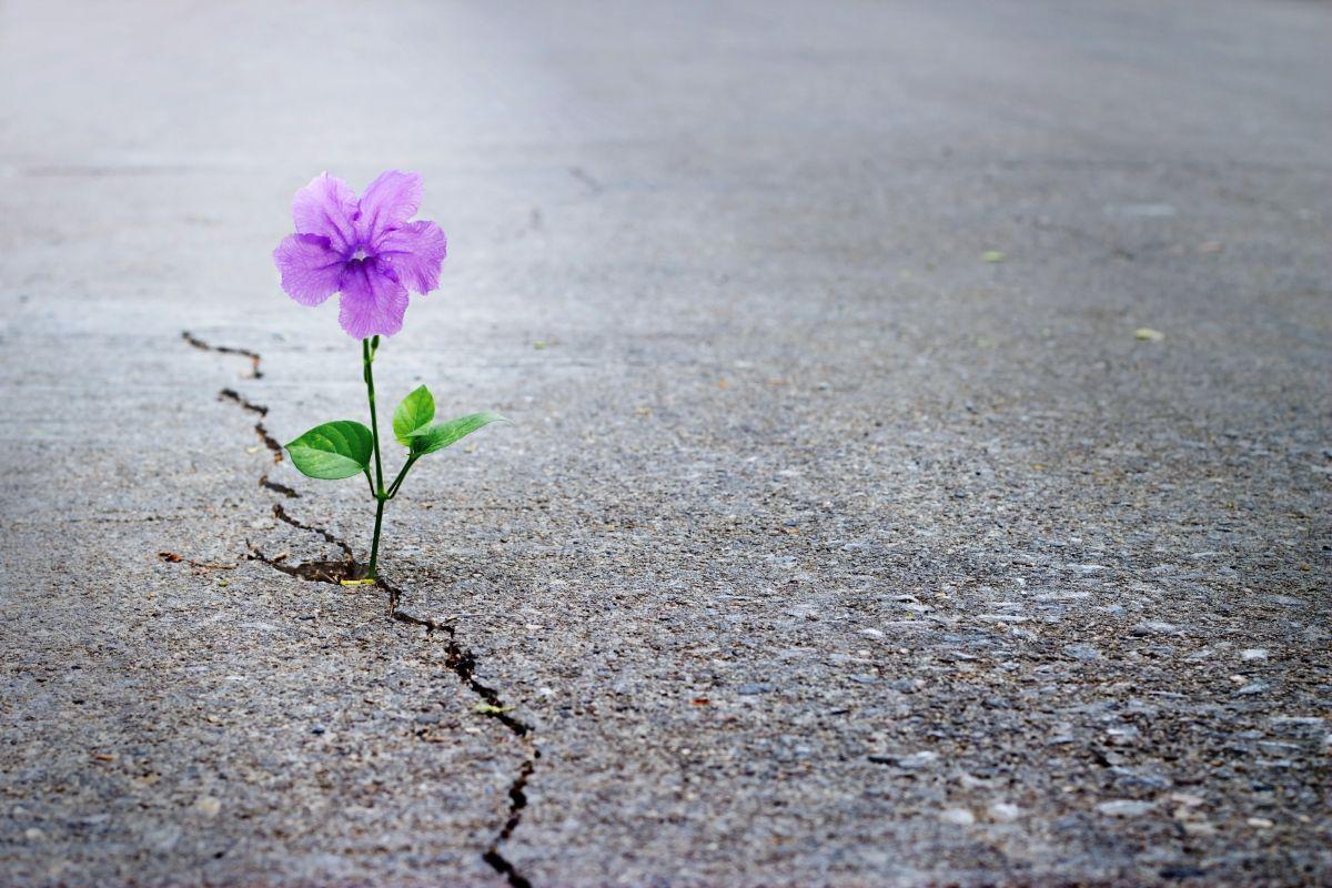 Purple,Flower,Growing,On,Crack,Street,,Soft,Focus,,Blank,Text