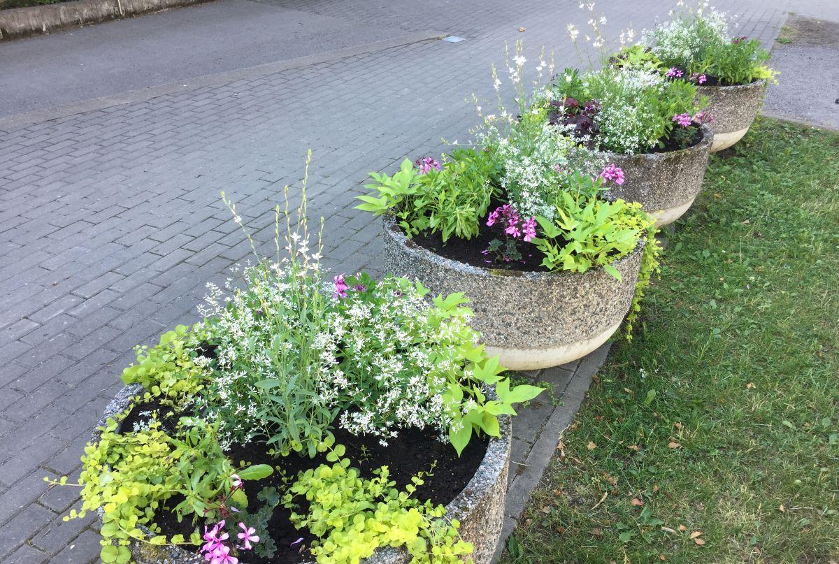 Nõmme vaasides ja lillekastides asenduvad võõrasemad suvelilledega