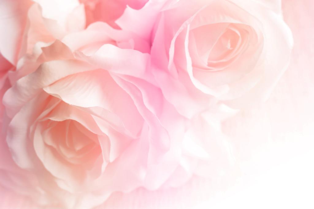 TALLINNA BOTAANIKAAIAS I Roosipäevadel esitletakse sadu roosisorte
