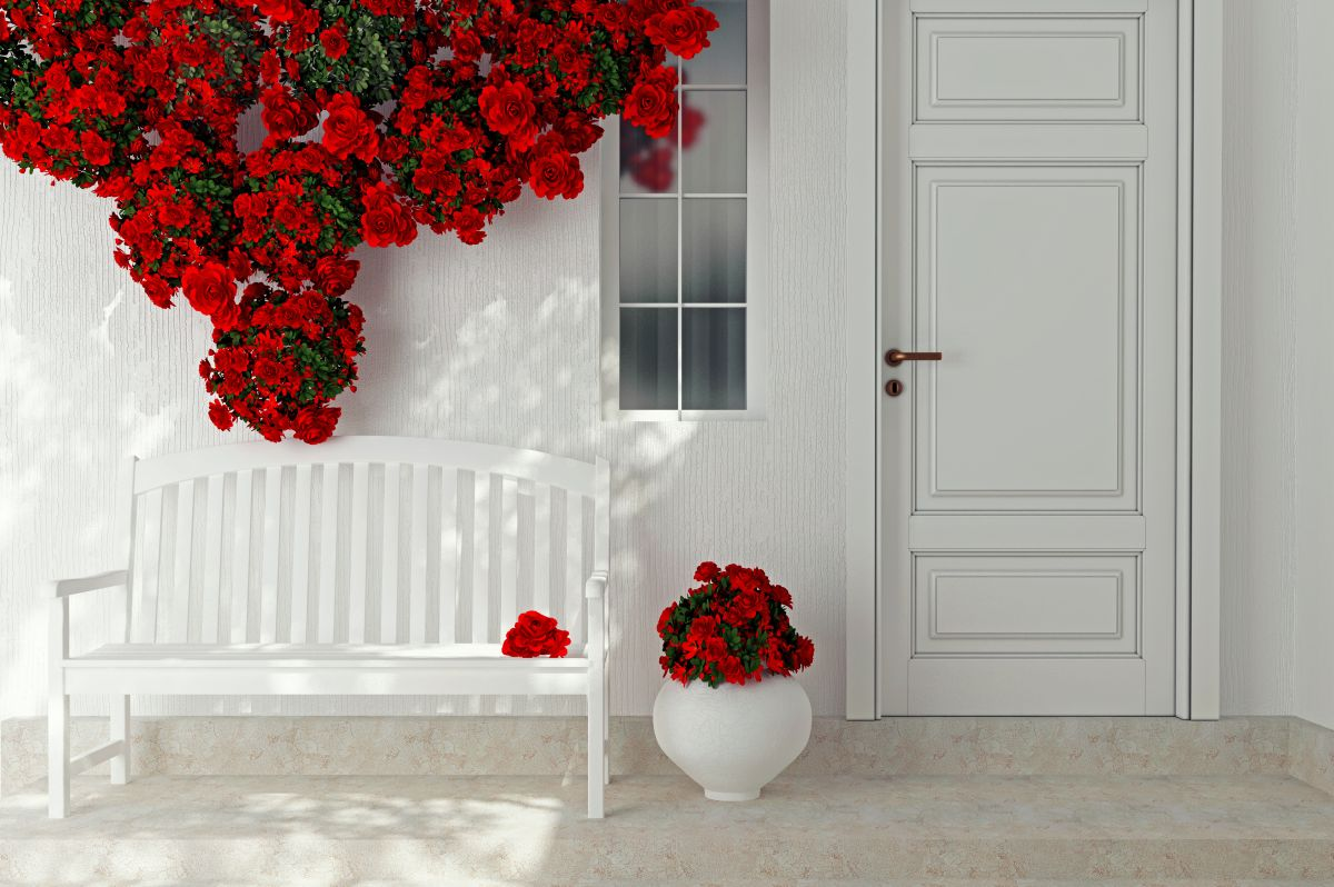 Front,View,Of,A,Wooden,White,Door.,Beautiful,Red,Roses