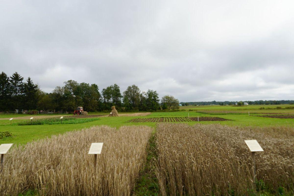 Sügisvärvides Kuusiku põllumajanduspark kutsub külla