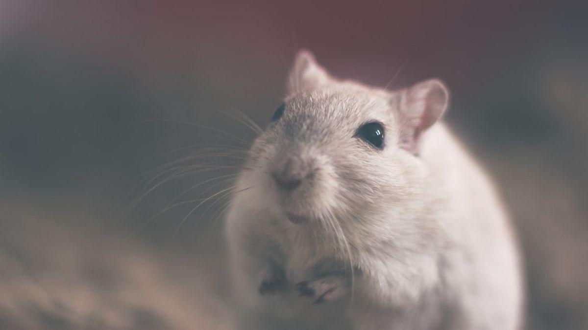 Võit loomadele! Euroopa Parlament toetas loomkatsete lõpetamist