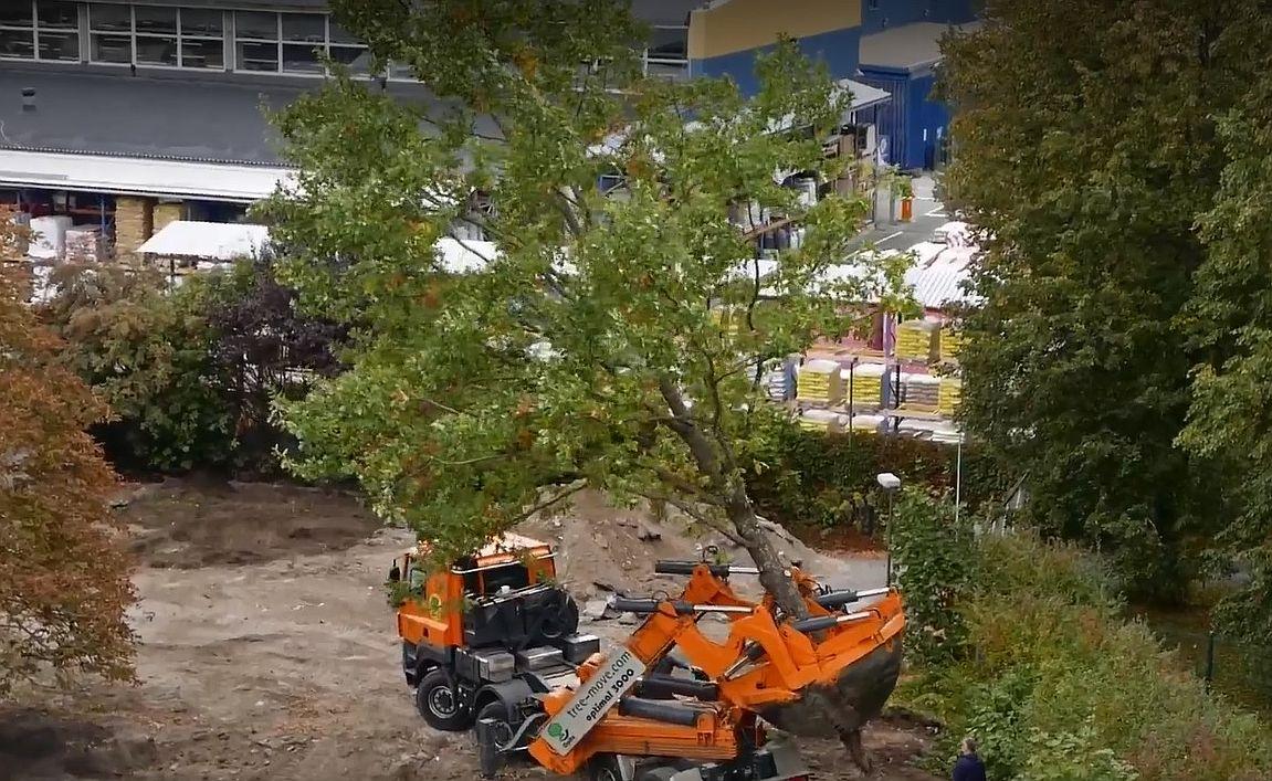 Laki puu