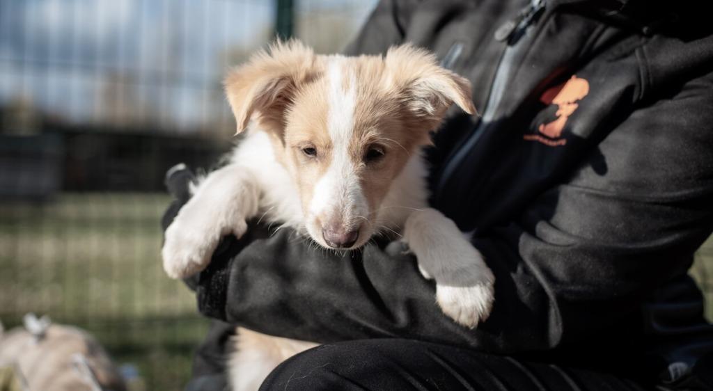 Varjupaikade MTÜ koer