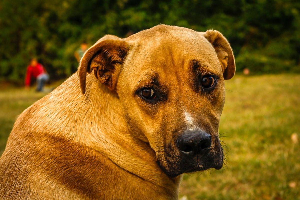 Millest annab märku kollane lint koera küljes?